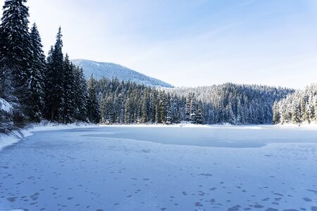 View at the lake Sinevir at winter sunny calm day, view at snowy forest and frozen lake, clear sky, no clouds. Concept of relax and unity with nature. Good for banners. Stock Photo