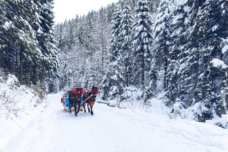 Horses at the road in winter forest. Snow in all around. Day time. Good background.