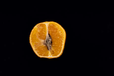 Spoiled moldy tangerine on black background, not eatable fruit, copyspace. 免版税图像
