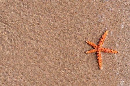 Closeup at sea starfish at water at the sand, view from the top, copy space, ocean and sea creatures, summer sea resort.