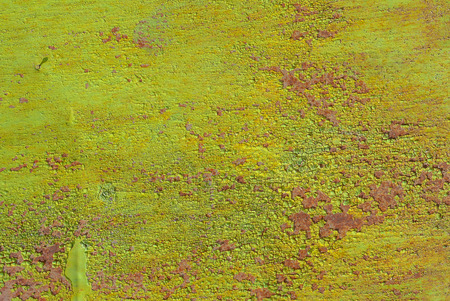 surface of rusty iron with remnants of old paint texture background Stock Photo