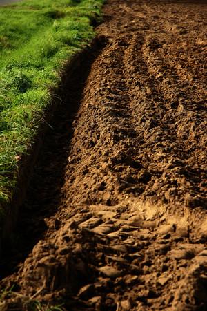 furrow: farmland furrow