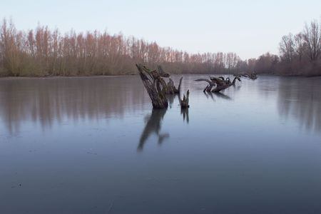 Frosted lake with willow stumps in the early morning. photo