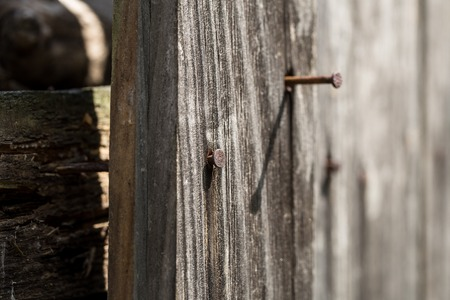 rusty nail: old wooden Board with a rusty nail, macro shooting