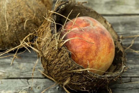 apricot kernels: Juicy peach in coconut shell on wooden background, place for text, closeup Stock Photo