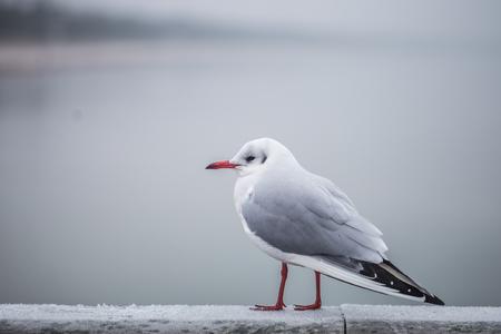 Beautiful little Seagull on promenade close up