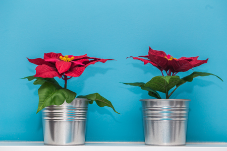 Beautiful Christmas Vases In A Metal Pot On A Blue Background Stock