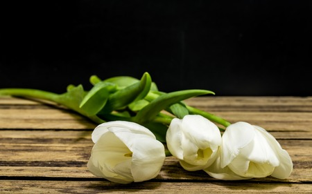 White tulips on a black background , the concept of fresh flowers Stock Photo