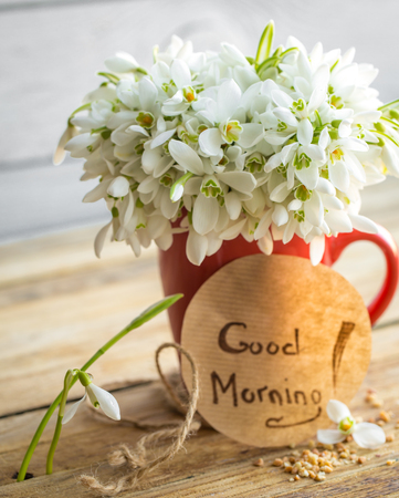Beautiful delicate snowdrops in a red Cup, and the words good morning on a round piece of paper lies on a wooden background concept of spring and flowers