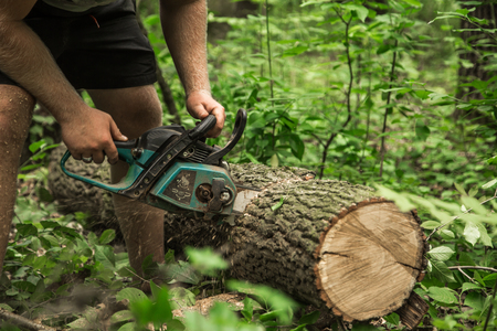 A man with a chainsaw cuts a tree in the forest ,closeup Stock Photo
