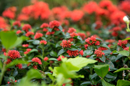 red garden flowers closeup ,concept of gardening Stock Photo