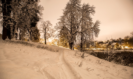 footpath in the snowy night forest in the countryside, the concept of beautiful winter