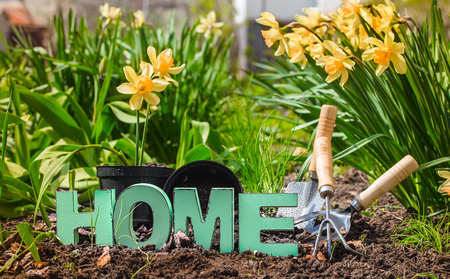Gardening, spring flowers yellow daffodils with garden supplies .Earth Day . Wooden letters with the inscription home .