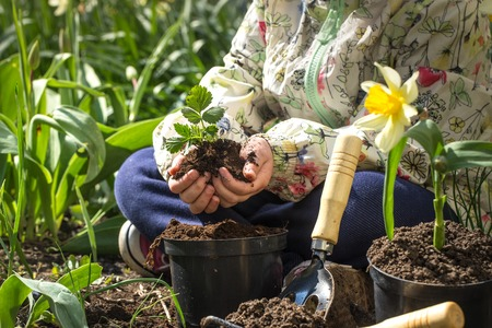 Little girl planting flowers in the garden, Earth Day. Kid helping at the farm. Standard-Bild