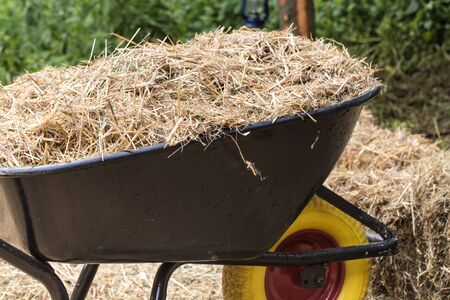 wheelbarrow with hay to feed Horses. in background more hay.