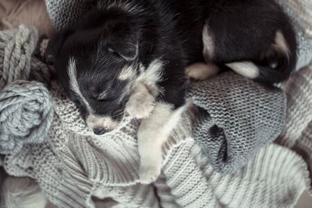 A cute little puppy is lying with a cozy sweater. The concept of Pets . Фото со стока - 130102328