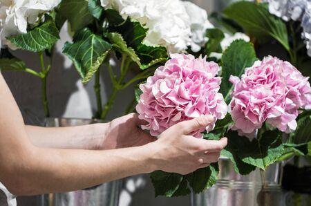 Hands holding a hydrangea flower in a flower shop.