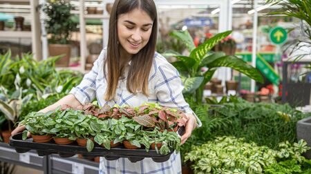 Beautiful young woman in a flower shop and choosing flowers. The concept of gardening and flowers . Standard-Bild
