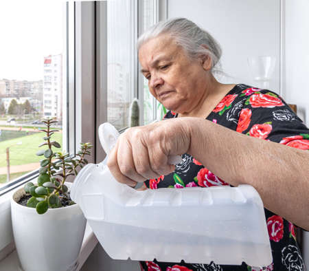 A nice elderly woman looks after her houseplants, cares for, and waters.
