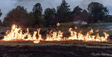 On a hot summer day, dry grass is burning on the field. Burning field with dry grass. Banque d'images