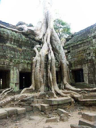 Banyan tree growing through ancient temple - Siem Reap, Cambodia