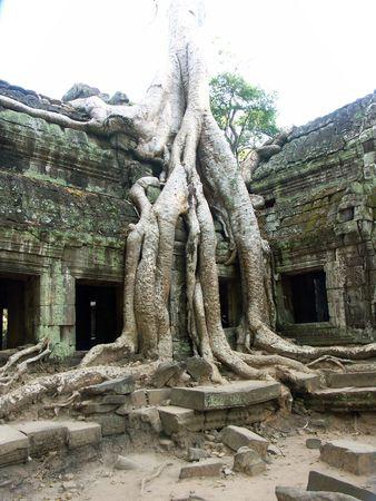 Banyan tree growing through ancient temple - Siem Reap, Cambodia Stok Fotoğraf - 245803