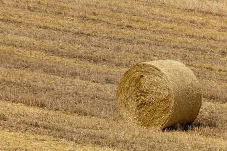 Hay bale on the field photo