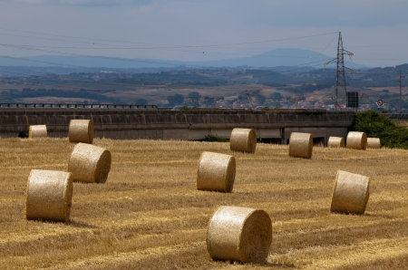 Hay bales on the field photo