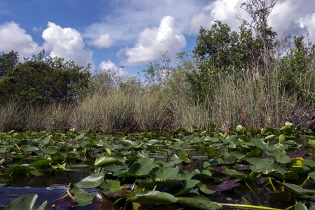 Everglades National Park in Florida is the largest wilderness of any kind east of the Mississippi River, visited on average by one million people each year. photo