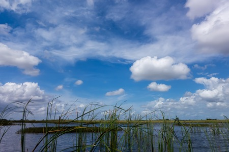 one of a kind: Everglades National Park in Florida is the largest wilderness of any kind east of the Mississippi River, visited on average by one million people each year. Stock Photo
