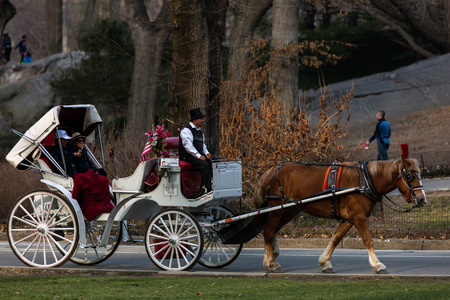 manhattans: NEW YORK - MARCH 12 2016: Horse-Drawn Carriages are a wonderful way to experience the beauty of the Manhattans Central Park. They can be found all year round lined up along Central Park South. Editorial