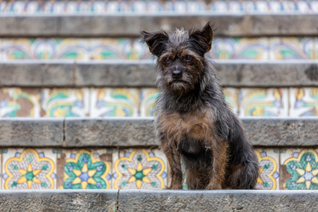 wares: Dog on the 18th century Staircase of Santa Maria del Monte, main landmark of Caltagirone, Sicily. The town is famous for its maiolica and terra-cotta wares. Stock Photo