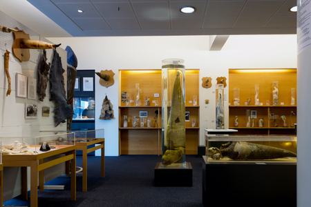 Icelandic Phallological Museum, founded in 1997, houses the worlds largest display of penises and penile parts. Editorial
