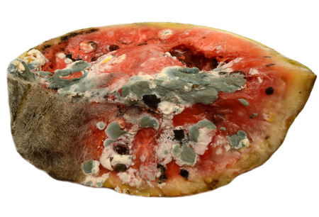 addle: Moldy rotting watermelon on a white background