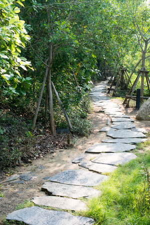 stepping stone walkway in garden. walkway made of stone along the trees in the public park