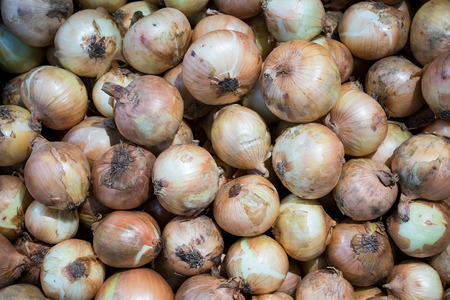 Aging onions in fresh market for background