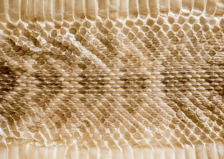 Genuine snake skin leather for texture and background. Seamless reptile pattern.