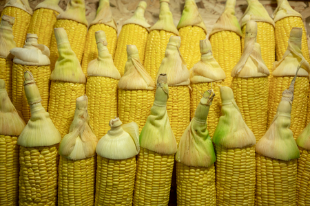 Rows of uncooked yellow corn with beautiful green cut for display at the shop. Closed up image for texture and background.