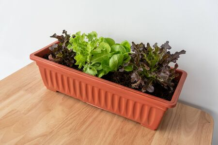 Organic vegetable in orange plastic pot or home planting on wooden table. Container vegetables gardening.