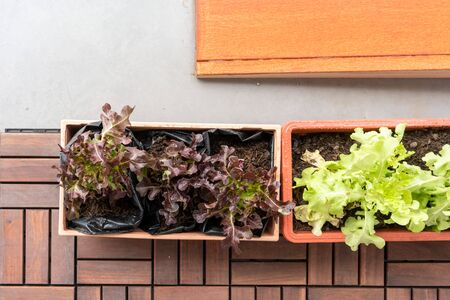 Organic vegetable in orange plastic pot or home planting on wooden floor. Container vegetables gardening.