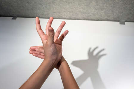 Kid hands creating silhouette shadow of deer on white wall background. Hand shadow of deer.
