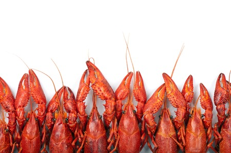 Prepared many red crayfish on white background photo