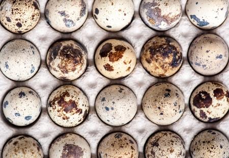 Quail eggs Standard-Bild