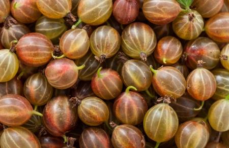 Closeup of ripe Gooseberries backgrounds Standard-Bild