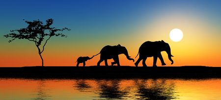evening: Black elephant silhouettes by a river.