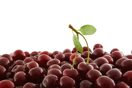 cherries: heap of red-ripe cherry isolated on white