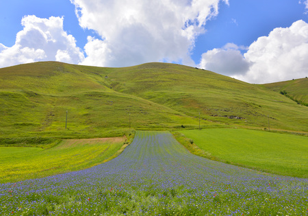 norcia: Castelluccio di Norcia (Umbria, Italy) - The flowering in the highland of Sibillini Mountains