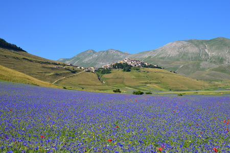 castelluccio di norcia: Castelluccio di Norcia (Umbria, Italy) - The flowering in the highland of Sibillini Mountains