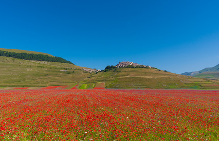 Castelluccio 2016 (Umbria, Italy) - The flowering in the highland of Sibillini Mountains