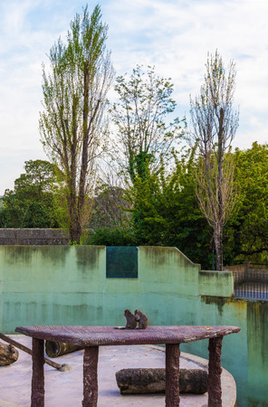 Rome, Italy - 1 April 2017 - A visit to the Biopark, a zoological park in the heart of Rome in Villa Borghese. In this photo in particular: the macaque monkeys Editorial